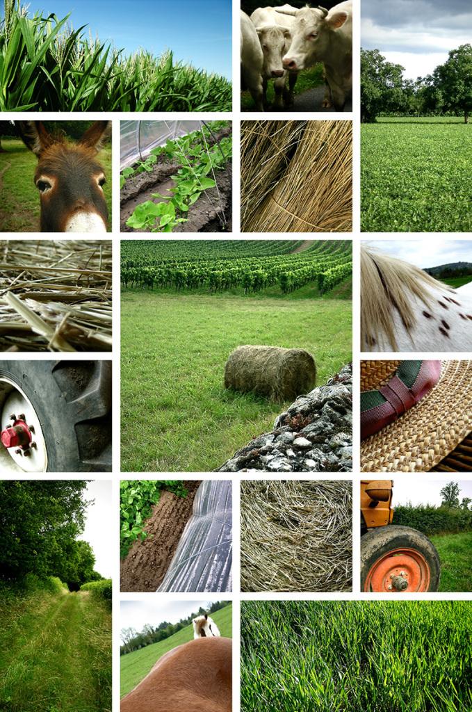 Les agriculteurs de moins en moins nombreux